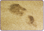 Dirty shoe print on carpet before using Super Clean.